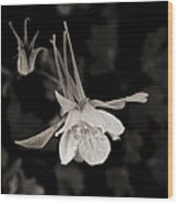 Moonlight Columbine Wood Print
