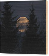 Moonset In The Spruce Bog Wood Print