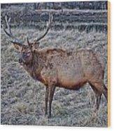 Moose 2 Wood Print