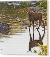 Moose Baby 2 Wood Print