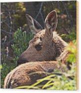Moose Baby 5 Wood Print