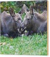 Moose Calves  Wood Print