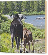 Moose Ends Baxter State Park Maine Wood Print