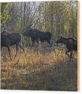 Moose Family Wood Print