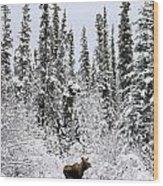 Moose In Deep Snow, Near Teslin, Yukon Wood Print