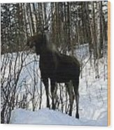 Moose In Winter Wood Print