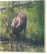 Moose Is Loose Wood Print