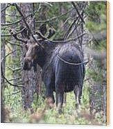 Moose Looks Wood Print