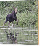 Moose On The Move Wood Print