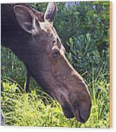 Moose Profile Wood Print