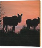 Moose Silhouetted At Sunset Wood Print