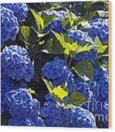Mophead Hydrangeas Dry Brushed Wood Print