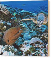Moray Eel On A Reef Wood Print