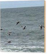 More Pelicans Wood Print