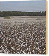 Morgan County Cotton Crop Wood Print