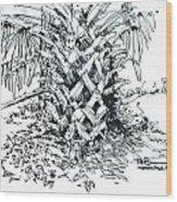 Morikami Gardens' Tree Boca Raton Florida  Wood Print