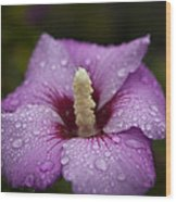 Morning Dew On Garden Flower Wood Print