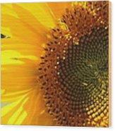 Morning Dew On Sunflower Wood Print