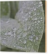 Morning Dew Wood Print