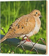 Morning Dove II Photoart Wood Print