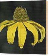 Morning Flower 2 Wood Print