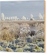 Morning Frost Wood Print