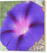 Morning Glory Fire Wood Print