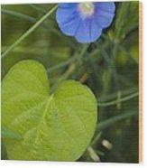 Morning Glory (ipomoea Hederacea) Wood Print