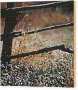 Morning Grass Wood Print