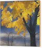 Morning Maple Wood Print by Rob Travis