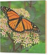 Morning Monarch Wood Print