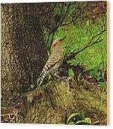Morning Northern Flicker Wood Print