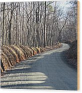 Morning Shadows On The Forest Road Wood Print