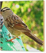 Morning Sparrow II Wood Print