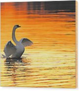 Morning Stretch Wood Print