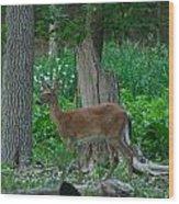 Morning Stroll 7353 1743 Wood Print