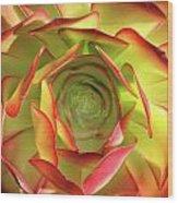 Morning Succulent Wood Print