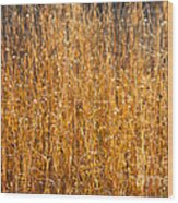 Morning Sunshine On The Marsh Wood Print