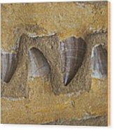 Mosasauras Teeth Wood Print by Garry Gay
