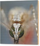 Mosquito Feeding Wood Print by Sinclair Stammers