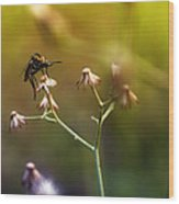 Mosquito Tiger Beefly Wood Print