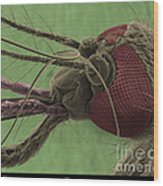 Mosquitos Head, Sem Wood Print