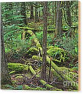 Moss And Fallen Trees In The Rainforest Of The Pacific Northwest Wood Print