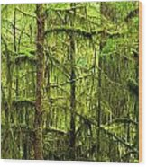Moss-covered Trees Wood Print