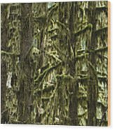 Moss Covered Trees, Hoh Rainforest Wood Print