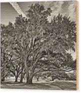 Moss-draped Live Oaks Sepia Toned Wood Print