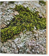 Moss In The Middle Wood Print