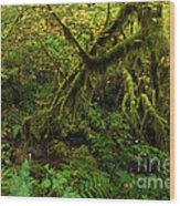 Moss In The Rainforest Wood Print