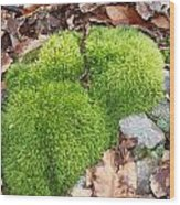 Moss On A Rock Wood Print