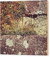 Moss Wall Abstract Wood Print